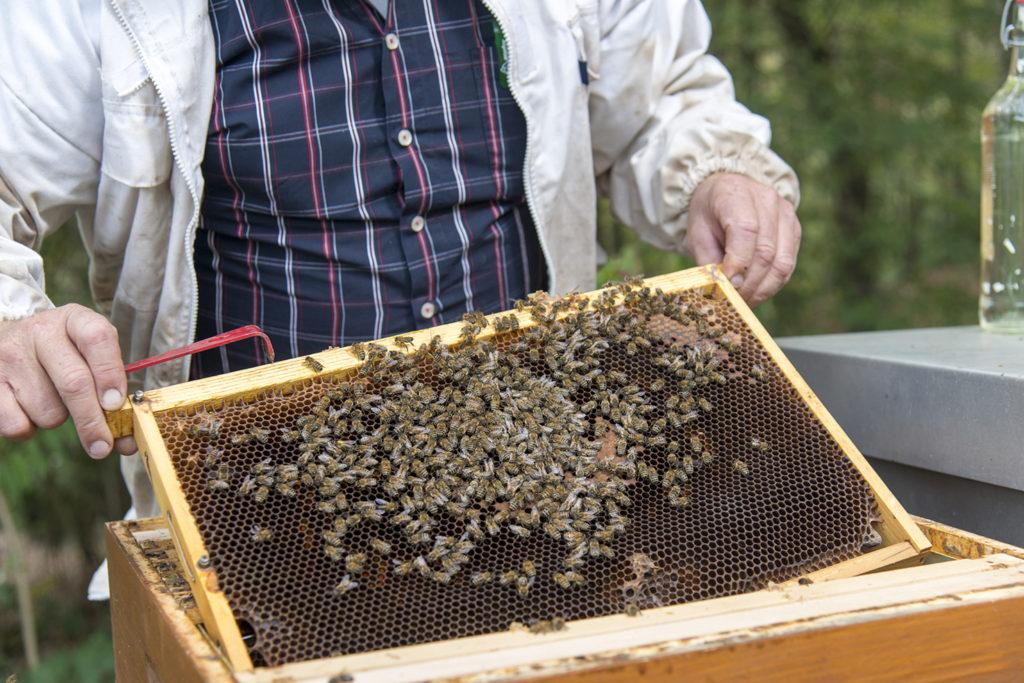 Imker hält Waben mit Bienen