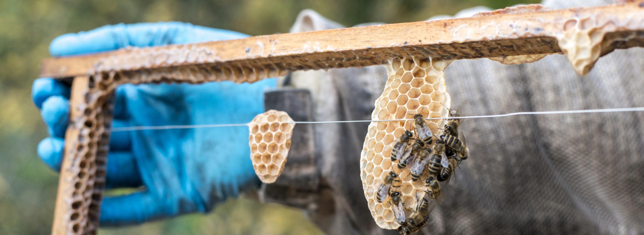Bienstock mit Waben und Bienen