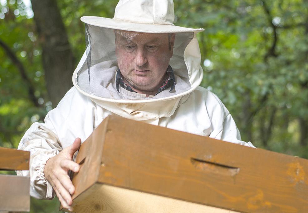 Imker beschaut seine Bienenvölker