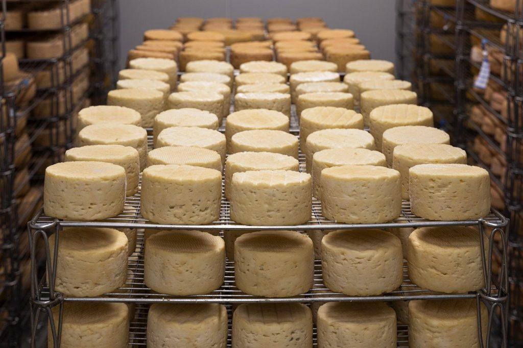 Käselaiber auf Gittern in der Produktion