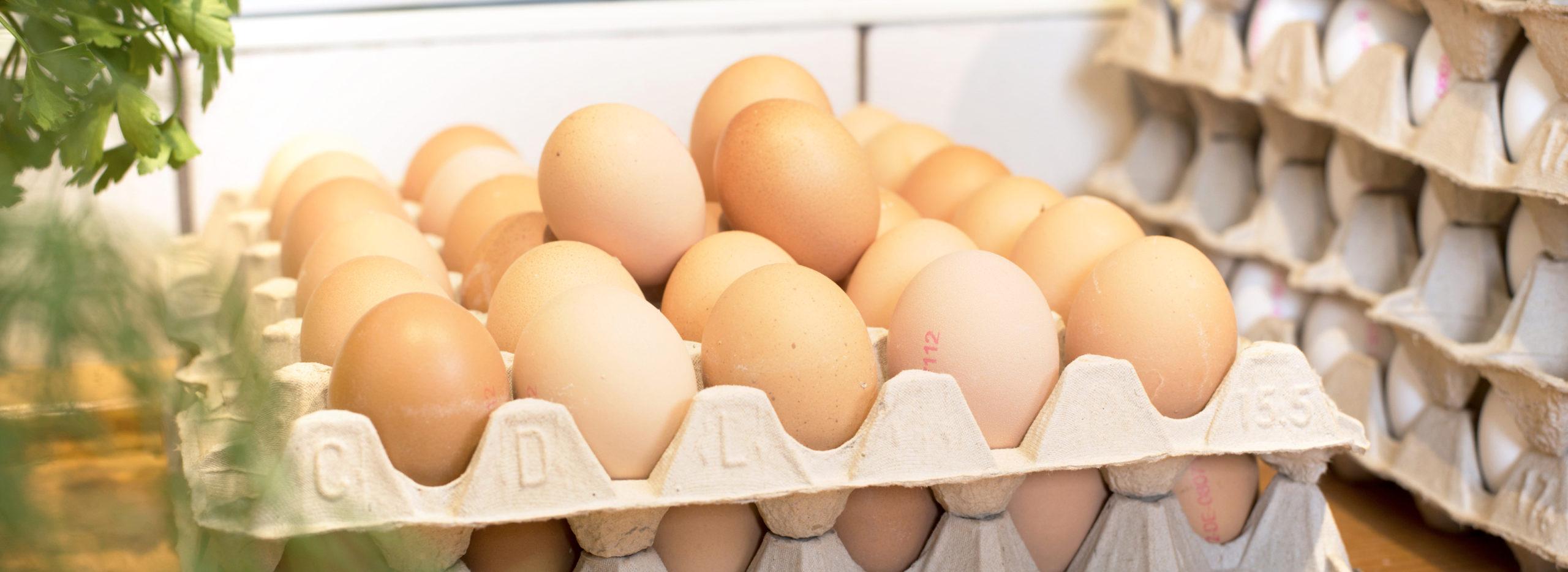 Paletten mit Eiern