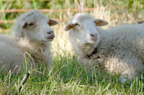 Jahreszeit erleben Schafe Tierwohl