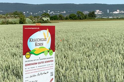 KraichgauKorn Feld 100% ungespritzer Weizen