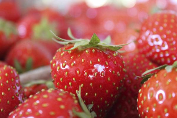 Erdbeeren Jost Landwirtschaft