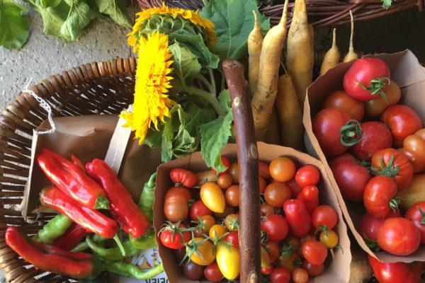 Obst Gemüse Hoflädchen Ochsenschläger